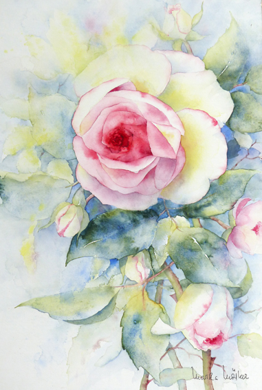 Rose_Heritage_18_9_64X43