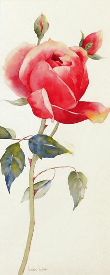 Lange _rote_Rose_100X47
